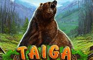 Играйте на деньги в игровые автоматы Тайга